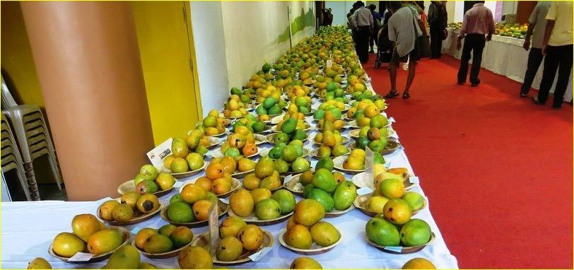 Goa-Mango-Festival