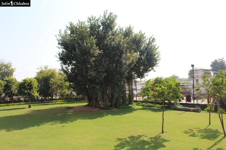 Adalaj Vav Garden