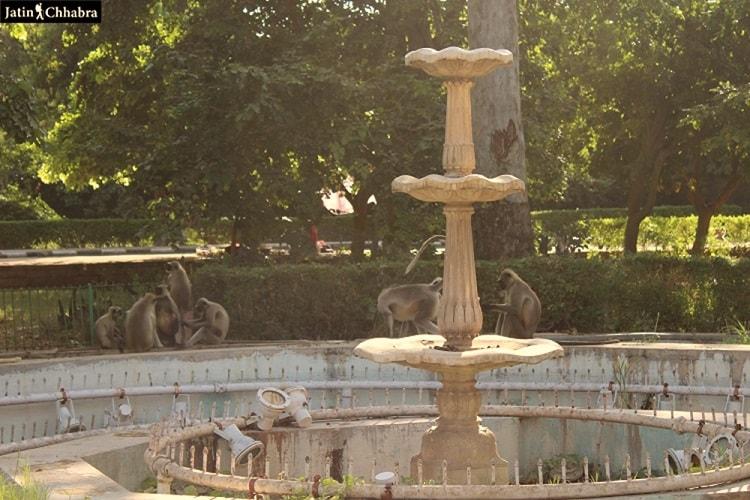 Langurs at Mandore Garden