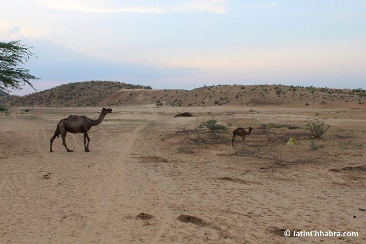Desert dunes of Jaipur aka Chhabra Sand Dunes