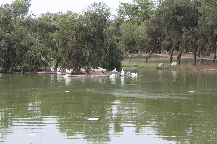 Lake at Rajghat with swans