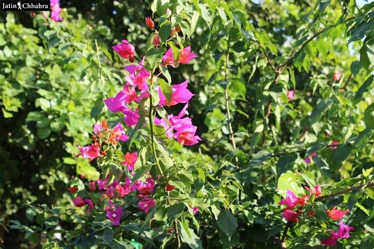 Mandore Garden